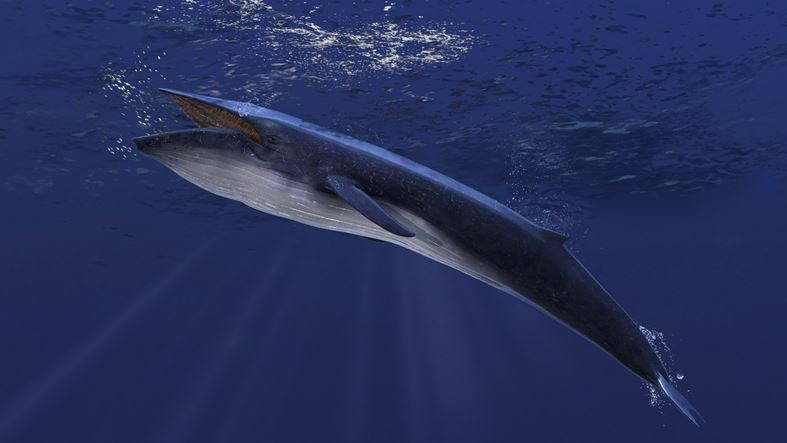 An unheard of song leads to the ocean discovery