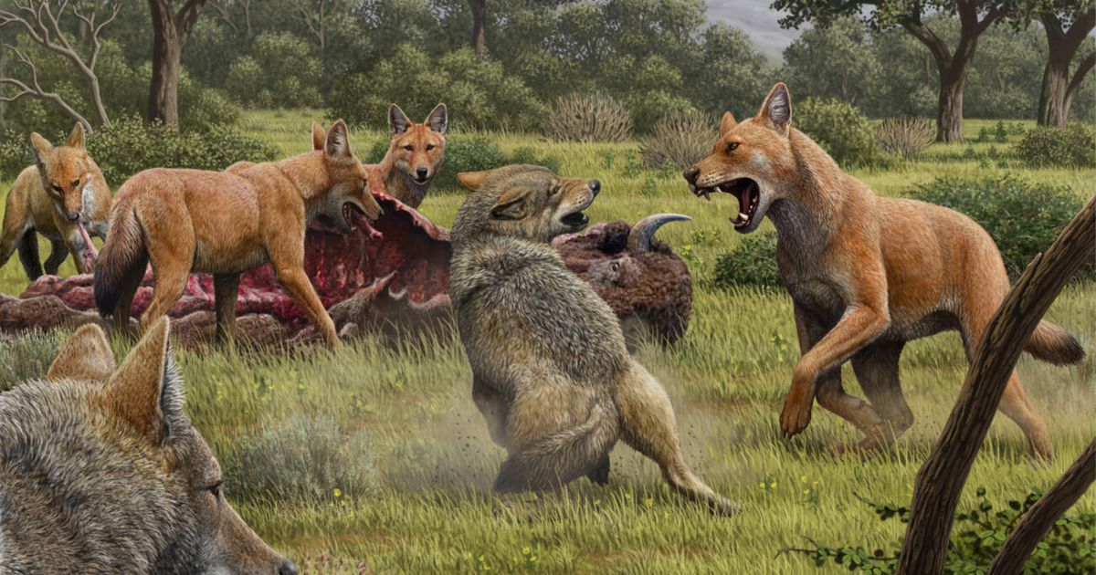 Game of Thrones terrible wolves were real.  We now know why they became extinct