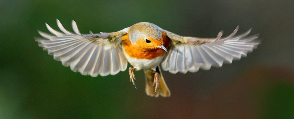 "Birds have an ambiguous ""quantum sense"".  For the first time, scientists saw it in action"